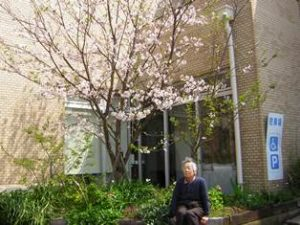 リフレ油壺 桜のお花見