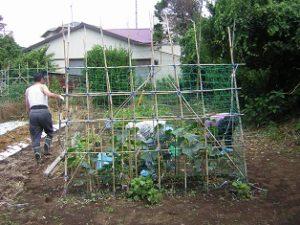 リフレ油壷 じゃが芋の収穫